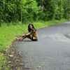 Shyna Sharma Travel Blogger