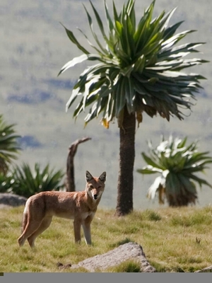Trekking in Ethiopia