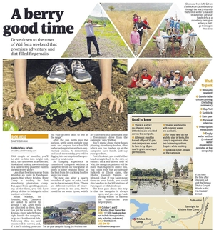 Strawberry Plantations with river Bank Camping @ Wai, enroute Panchgani.