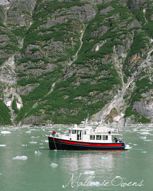 Tracy Arm Fjord and Glacier Cruise