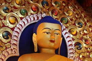 Into the lap of Dhauladhar - McLeodganj