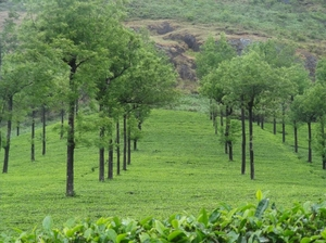 Munnar and Thekkady- Lush green tea gardens to aromatic spice plantations