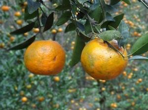 Chhota Mangwa – The land of orange orchards and perdurable beauty
