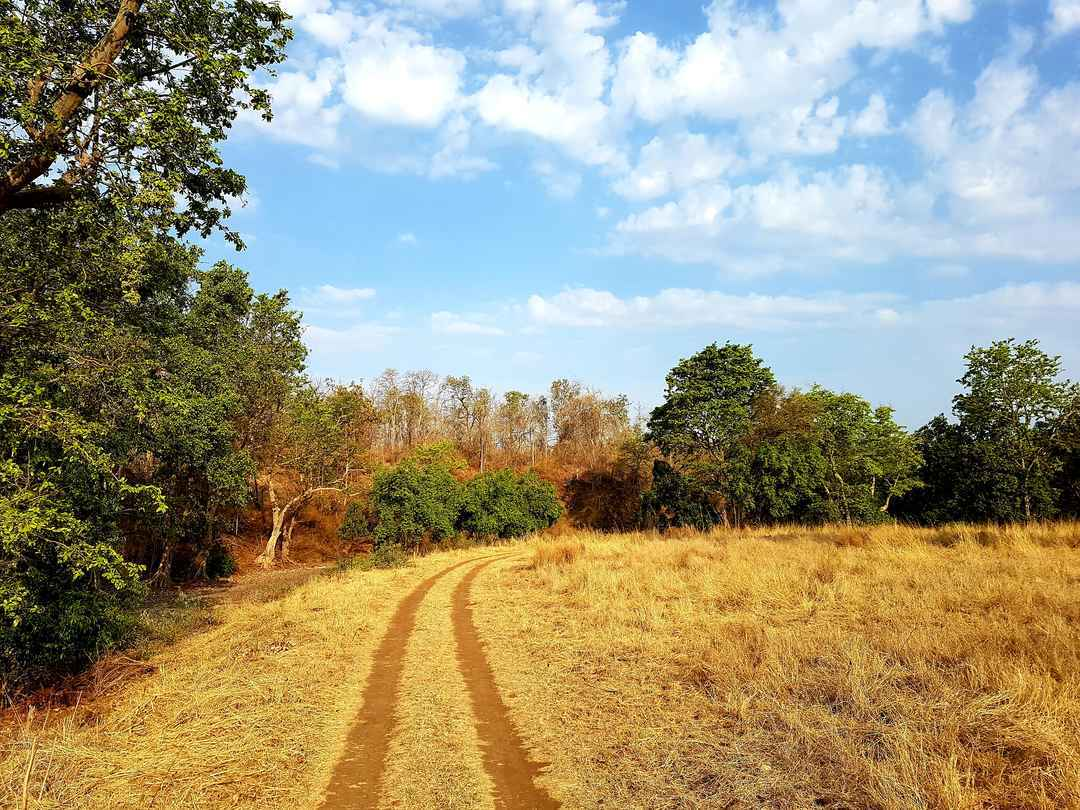 Magical Melghat Tiger Reserve with #ISLPIndore