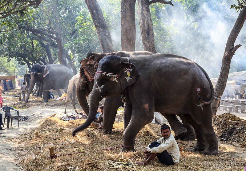 सोनपुर मेला: एशिया का सबसे बड़ा पशुमेला जिसे देखकर हैरान रह जाएँगे आप!