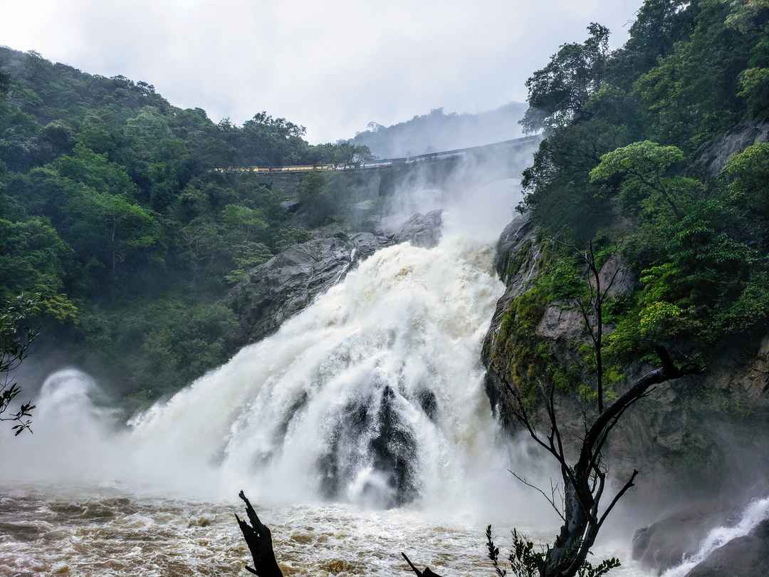 20 kms Trekking At Dudhsagar Falls, Goa In Monsoon #trekking #monsoon #goa