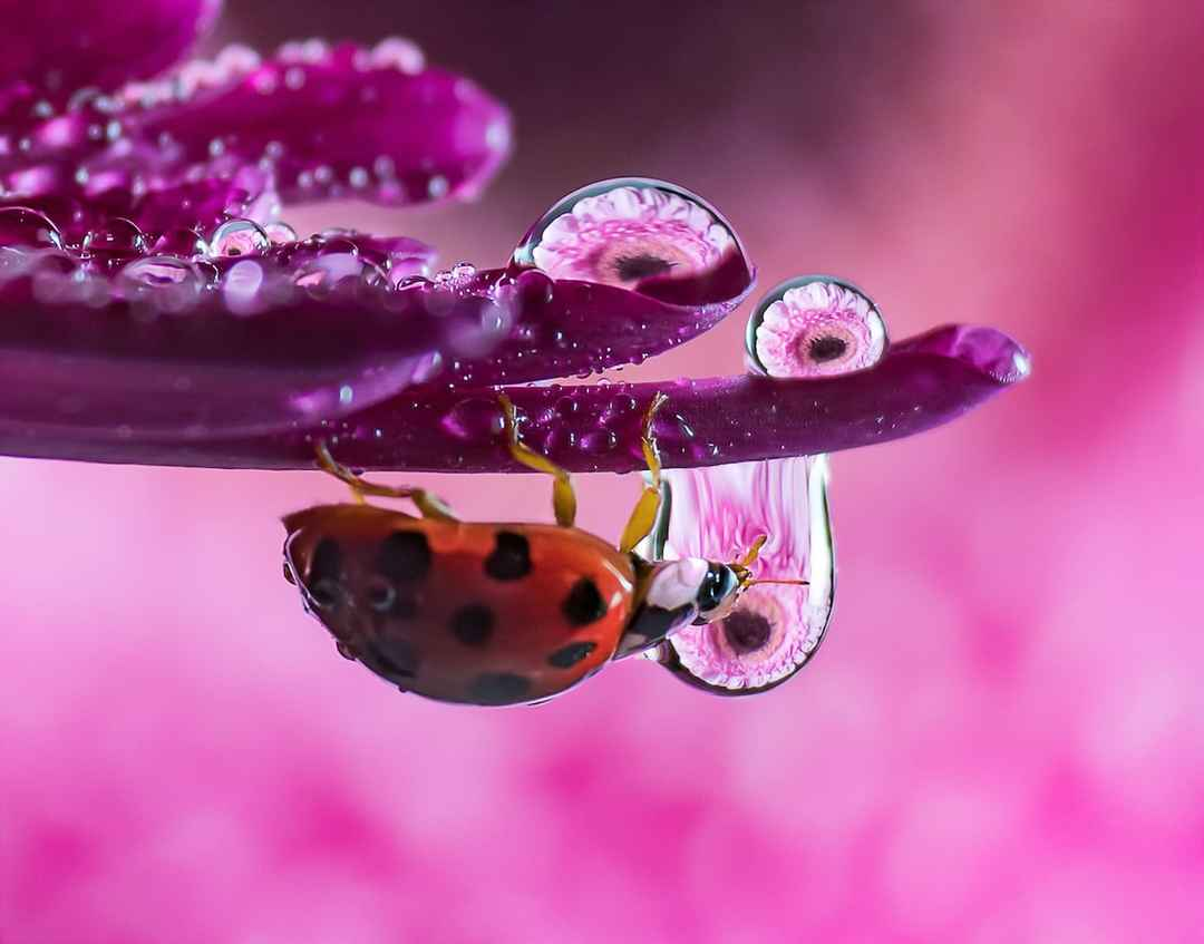 How to Process Macro Photography for Stunning Results by . | Tripoto