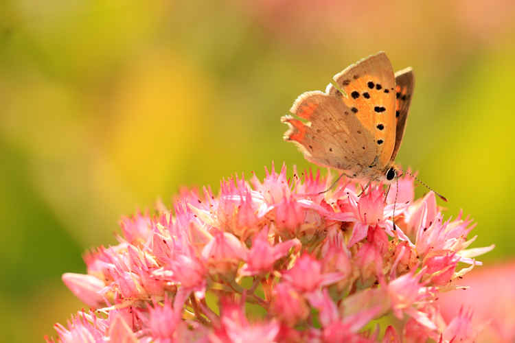 See 7 Tips for Getting Started with Macro Photography for Satisfying Results by . | Tripoto