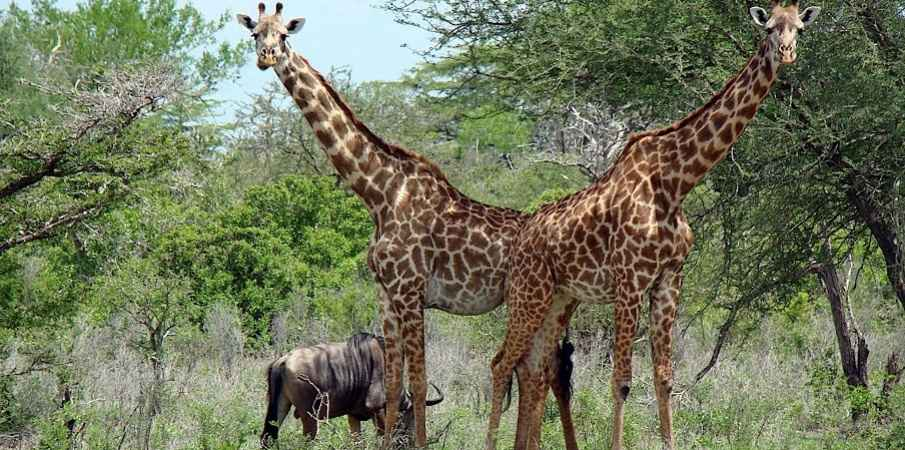 Beyond Masai Mara: Unexplored And Underrated National Parks In Africa