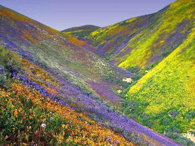 Valley Of Flowers Trek Itinerary Tripoto