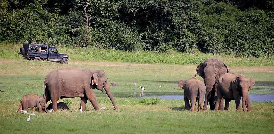 Safari in May