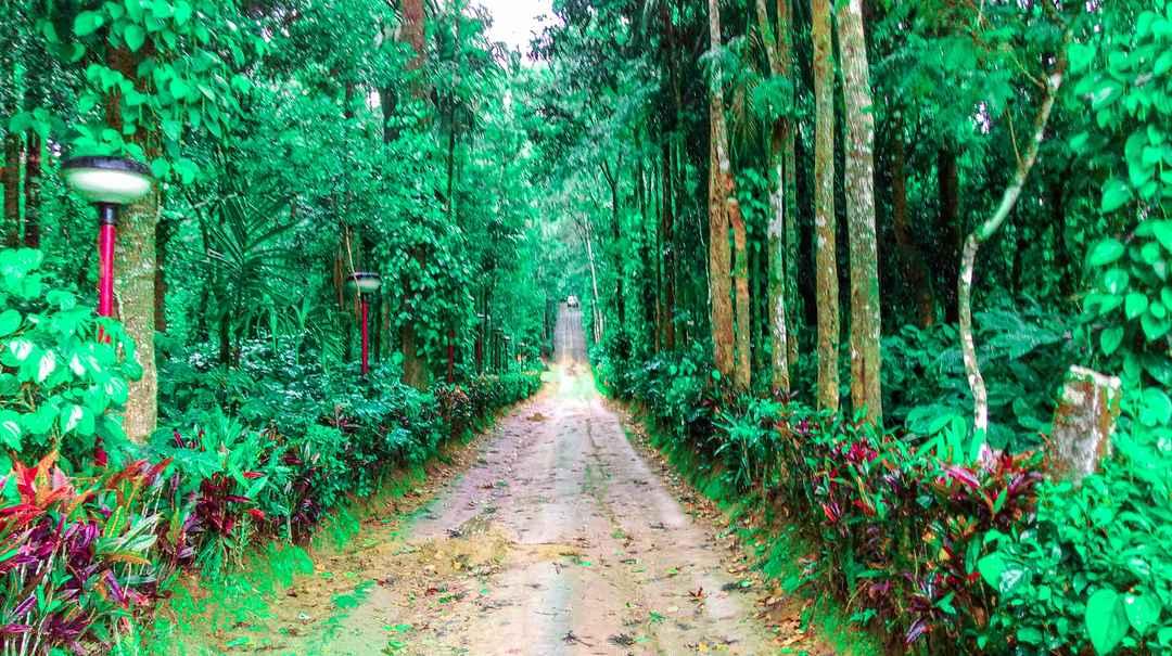 Things to do in Coorg, Karnataka - Tripoto