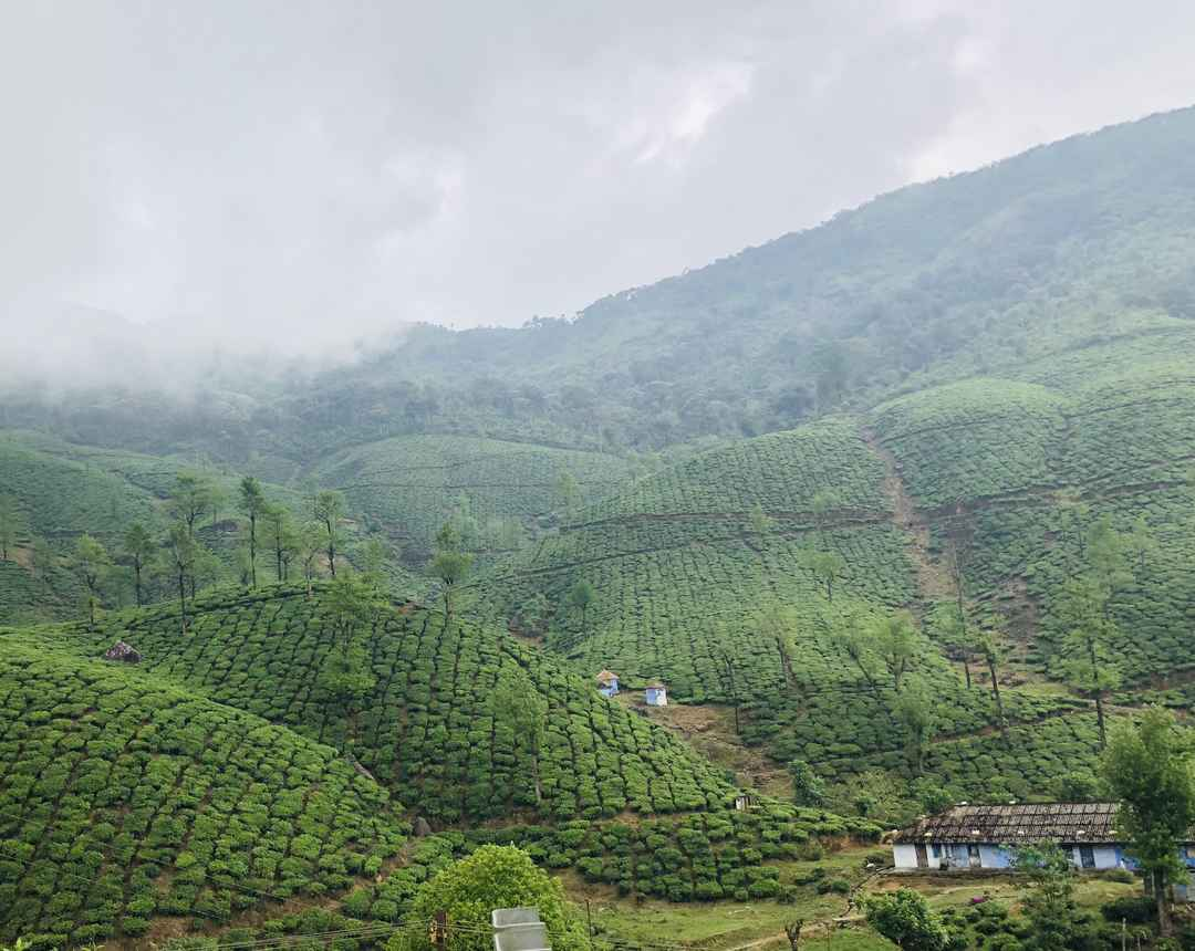 Tamil Nadu's Beautiful Tea Estate - Valparai