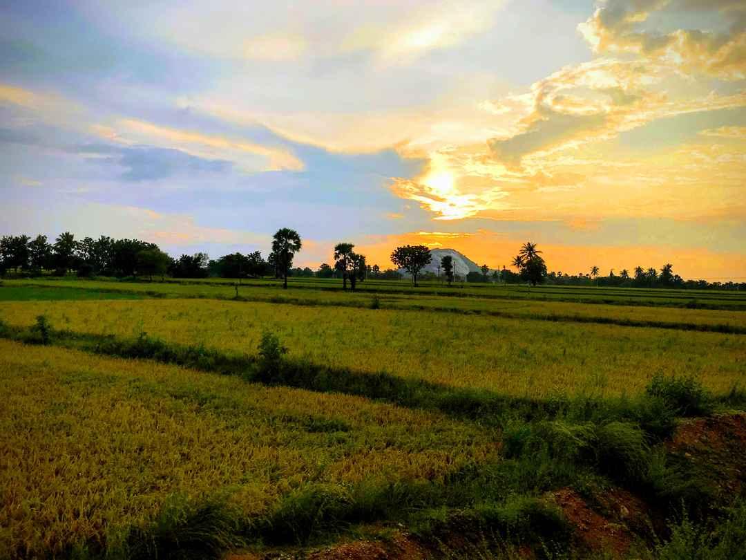 Puri - Konark - Bhubaneshwar