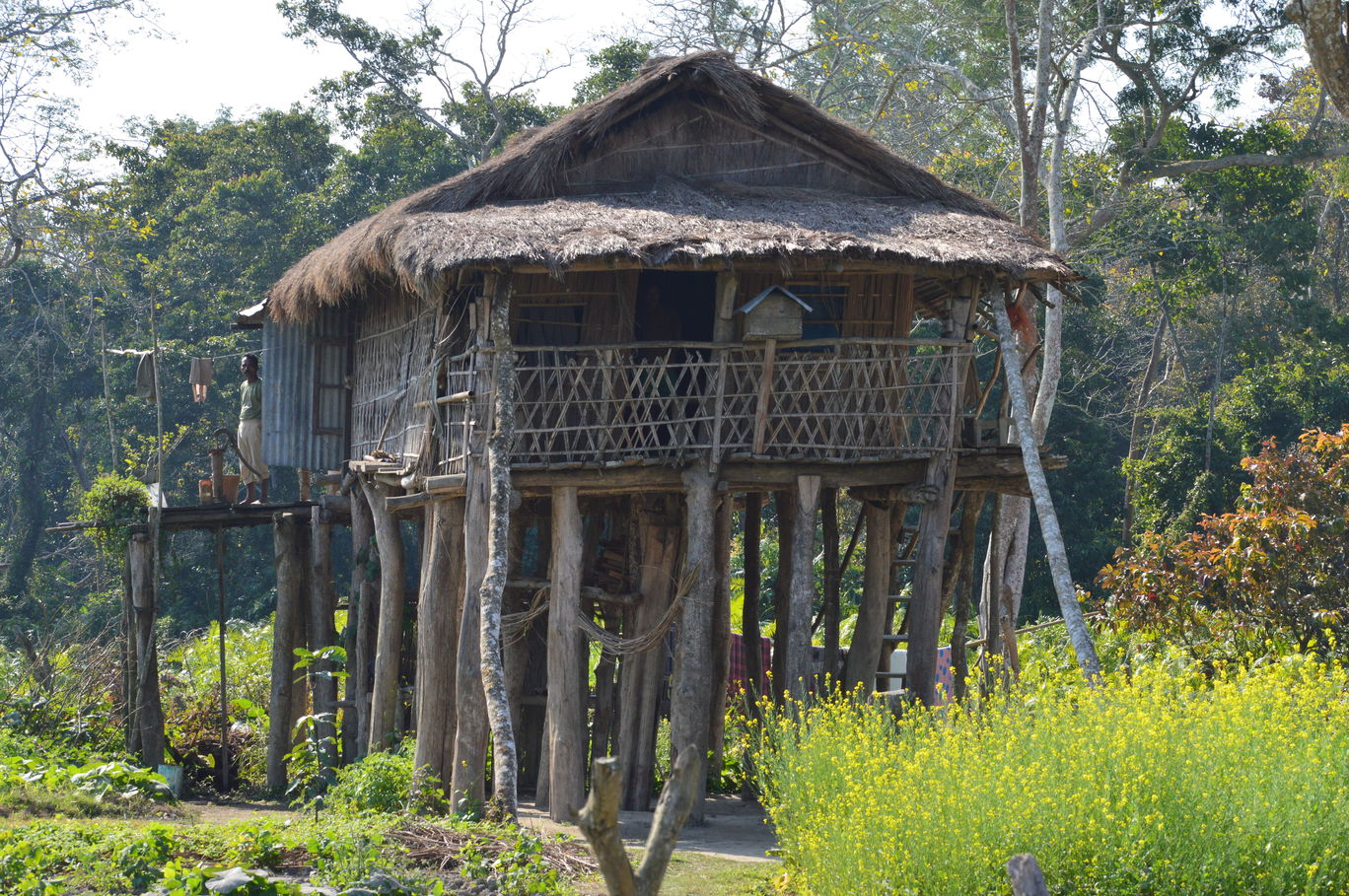 a memorable trip to kaziranga national Guwahati tour packages  make up your mind to have your vacation days more memorable with a  manas national park, kaziranga national park and.